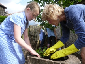 Planting up herbs in the old felled tree