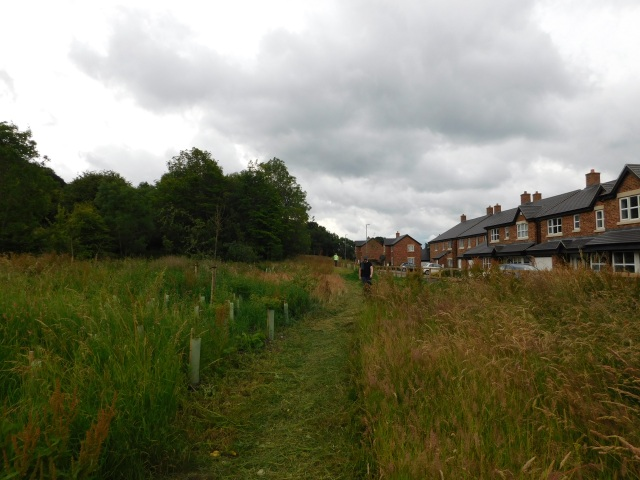 The first users make a their way much more easily along the newly mown path to the Nethercliffe entrance.