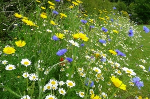 Meadow_flowers_Wildflower_Garden-660x439